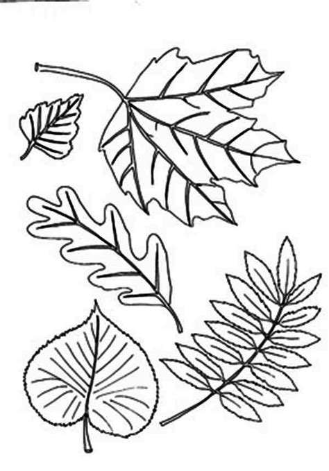 autumn leaf coloring page coloring home