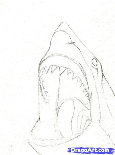 how to draw a doodle shark best 25 shark drawing ideas on whale
