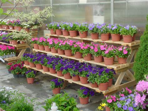 tiered garden display  step benches maine bucket