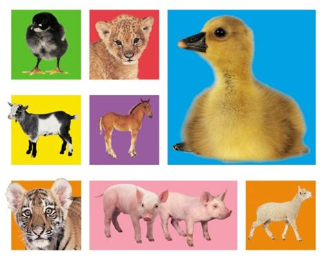 animal books pin animal book on