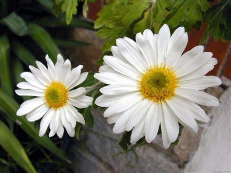 imagenes a flores flores