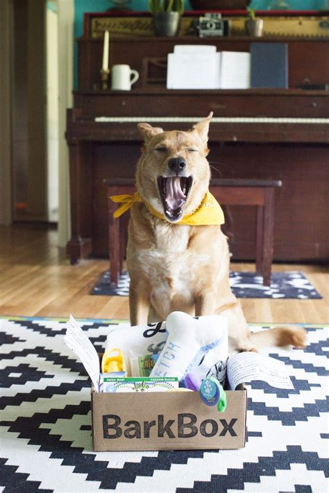 barkbox for dogs the 139 best images about barkbox on boxes allergies and to