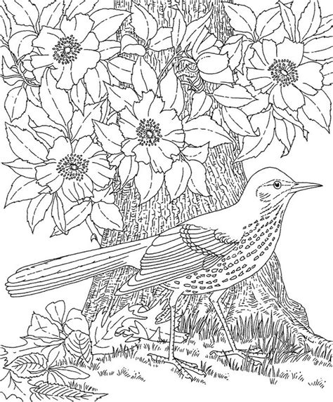 Adult Coloring Page Summer Bird 4 Coloring Pages For Adults