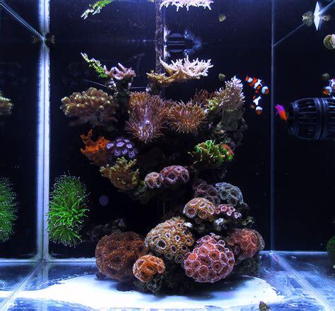 Fish Tank Aquascape Mr Microscope 2016 Featured Reef Aquariums Nano Reef