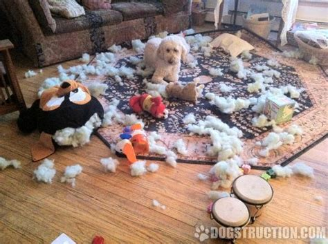 dog ate couch 10 ways to look on the bright side of dogstruction the