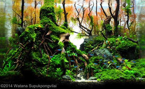 aquascape contest 2014 aga aquascaping contest 116