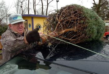 ann arbor cancels curbside christmas tree pickup to save money