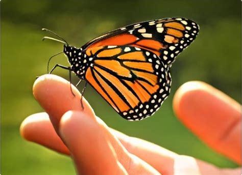 imagenes sobre mariposas autoestima y motivaci 243 n en forma de mariposa