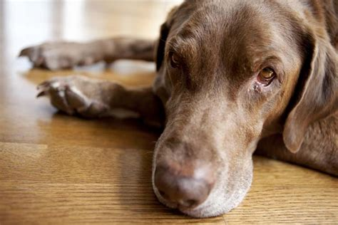 what are spots on dogs spots on dogs