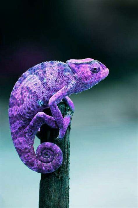Best 25 All Things Purple Purple Things In Nature Www Pixshark Images Galleries With A Bite