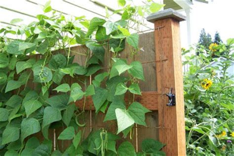 Cheap Fence Trellis Learn Gardening Diy Inexpensive Trellis