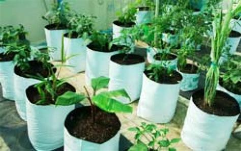 Grow Bag Gardening pioneer agro industry grow bags for gardening