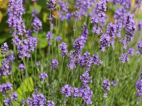 pflanzen die keine sonne brauchen pflanzen gegen schnecken gartenversand richard ward