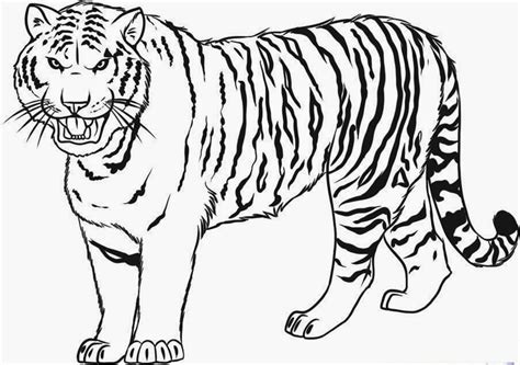 coloring page bengal tiger colours drawing wallpaper cute tigger for kids colour