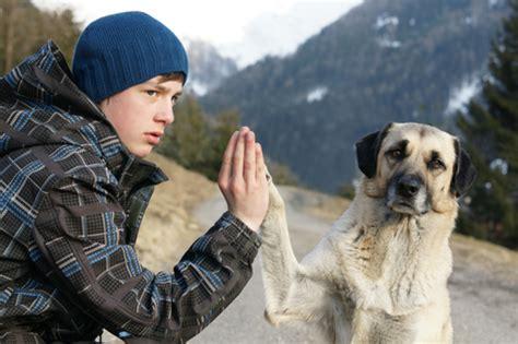companion dogs companion