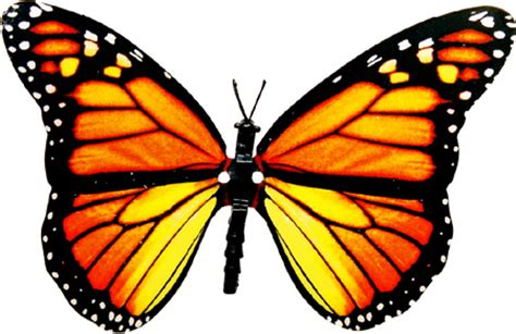 Monarch Butterfly Clipart Moving Image Pencil And In Color Monarch Butterfly Clipart Moving Image Moving Butterfly For Powerpoint