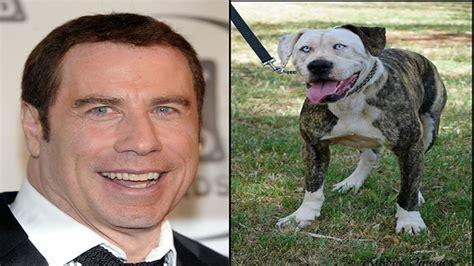 top celebrities dogs top 10 dogs who look like celebrities youtube