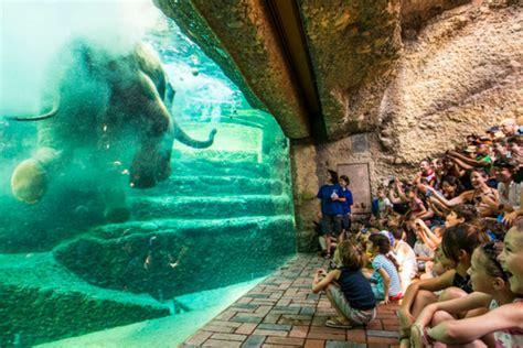 Zoologischer Garten Basel öffnungszeiten by Zurich Les Visiteurs Se Sont Ru 233 S Au Zoo De Zurich