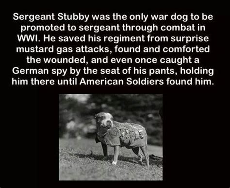 Sergeant Stubby Documentary 17 Best Ideas About Sergeant Stubby On War War Dogs And Working Dogs