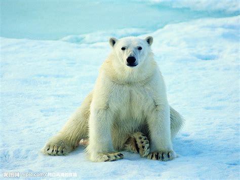 Two Polar Bears In A Bathtub by