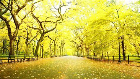 best hd downloader hd wallpapers 1080p widescreen nature free