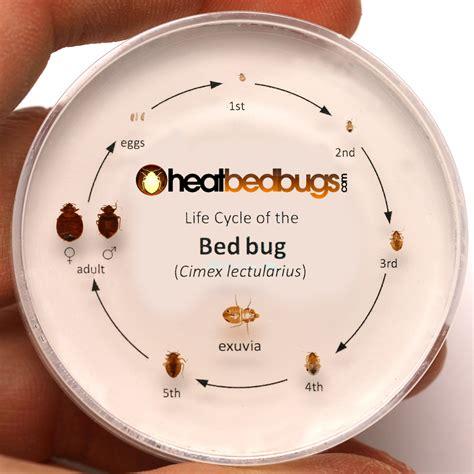 faq  bed bugs heat bed bugs