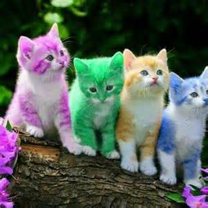 colorful cats cats image 3436486 by winterkiss on favim