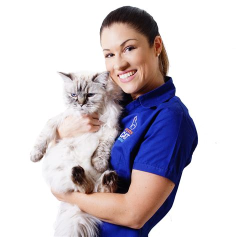 drive and cat hospital dr niquet elise perth cat hospital perth cat vets