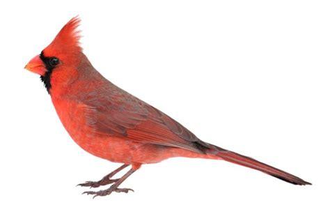 libro drle doiseau oiseaux prendre soin d un oiseau et de la cage toutpratique