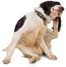 scratching no fleas how to stop scratching behaviors