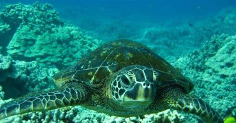 google images turtle turtle amazing creatures pinterest turtles google