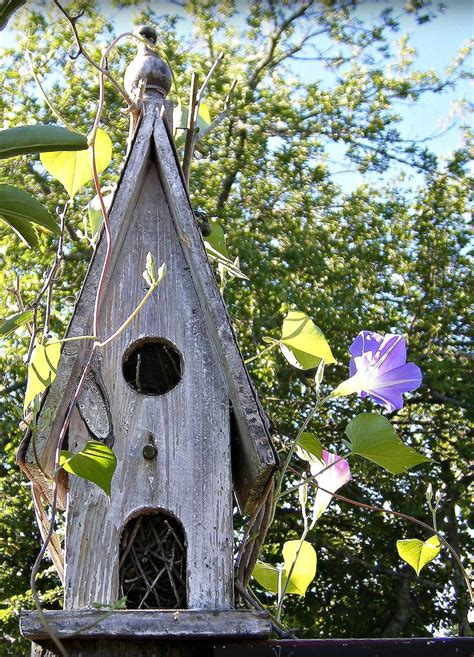 17 best images about birds birdhouses in art photos on