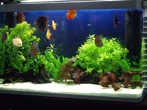 aquarium design with black sand white sand discus tank planted discus aquarium