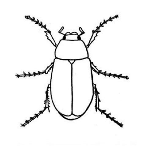 bed bugs color coloring pages free printable coloring pages
