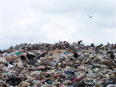 Where To Dump by Of Garbage Dumps Cesspools And Outhouses Aromas That