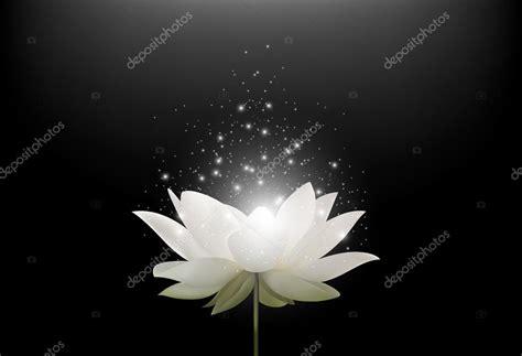 fiore di loto magic fiore di loto bianco magico su priorit 224 bassa nera