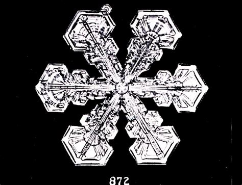 snowflake wilson bentley file bentley snowflake 872 jpg wikimedia commons