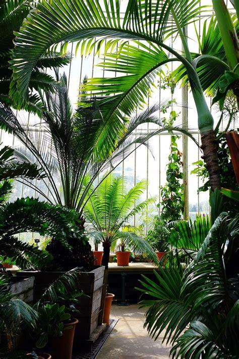 royal botanic gardens kew kew gardens london victorian