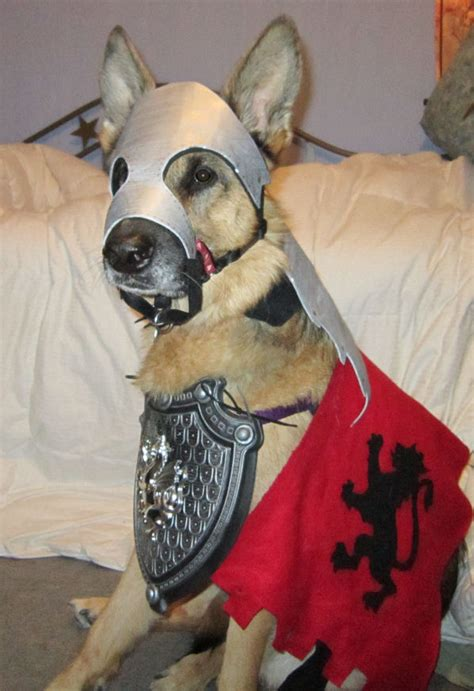 top  halloween costumes  german shepherd pups thatll