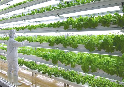 indoor garden technology toshiba s new product 1 week salad