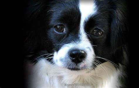 black and breeds black and white breed