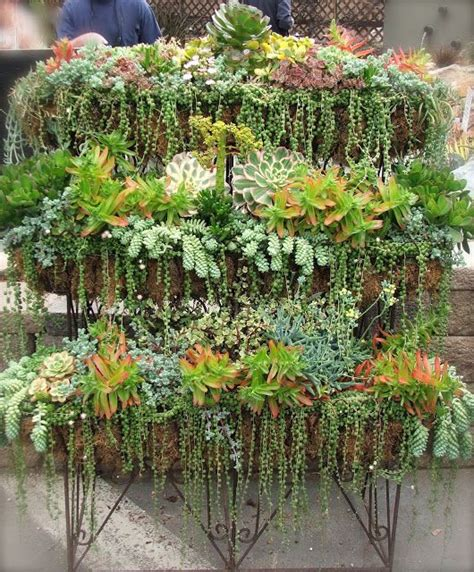 cascading indoor plants 17 best ideas about string of pearls on pinterest