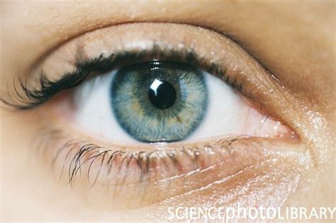 imagenes ojos humanos imagen de un ojo humano