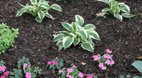how to choose and apply mulch to your flower beds hoosier homemade