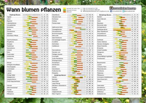 wann blumen säen blumen pflanzen aussaatkalender
