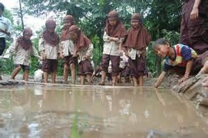 Bibit Padi Rojolele tanam padi merah putih bagian 2 sekolah alam nurul islam