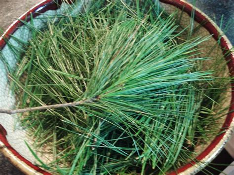 Pine Needle Brain Detox by Best 25 Spiritual Cleansing Ideas That You Will Like On