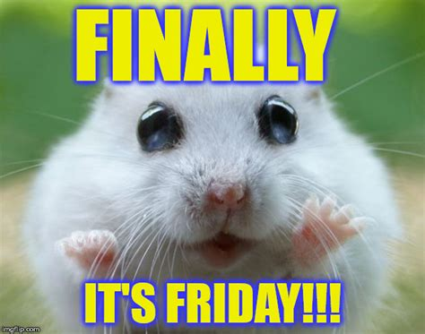 Friday Meme - friday animal meme www pixshark com images galleries