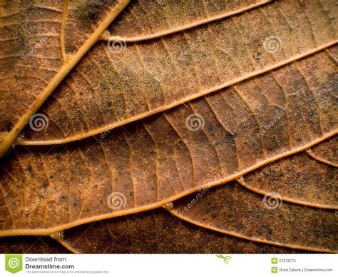 leaf closeup nature detail stock image image of leaf