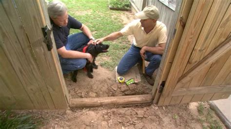 how to keep dogs from digging how to prevent your from digging a gate or fence today s homeowner